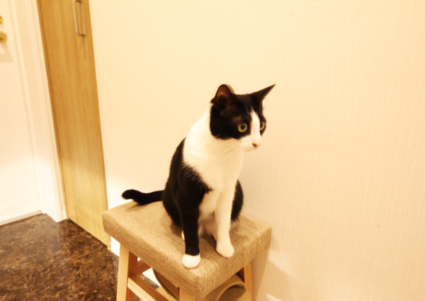 玄関、猫、キャット、動物、スツール、マンション、リノベーション、リフォーム、リノステージ