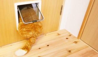 猫用扉、キャットスペース、通気性、換気、マンションリノベーション、水工房