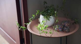 廊下、スタンド、テーブル、グリーン、植物、インテリックス、intellex