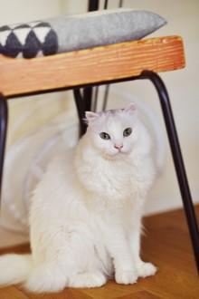 猫、猫と暮らす、リノベーション、スタイル工房
