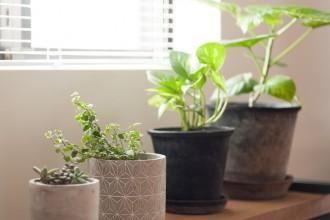 植物と暮らす、多肉植物、観葉植物、リビング、リノベーション、エコデコ