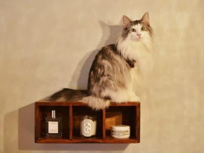 「リノベの最新情報」の「わが家は最高だニャー 猫もワタシも心地よいリノベーション《リノベのトレンドvol.28》」