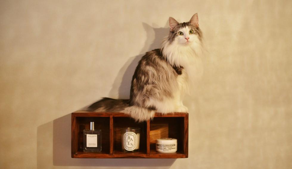 「わが家は最高だニャー 猫もワタシも心地よいリノベーション《リノベのトレンドvol.28》」