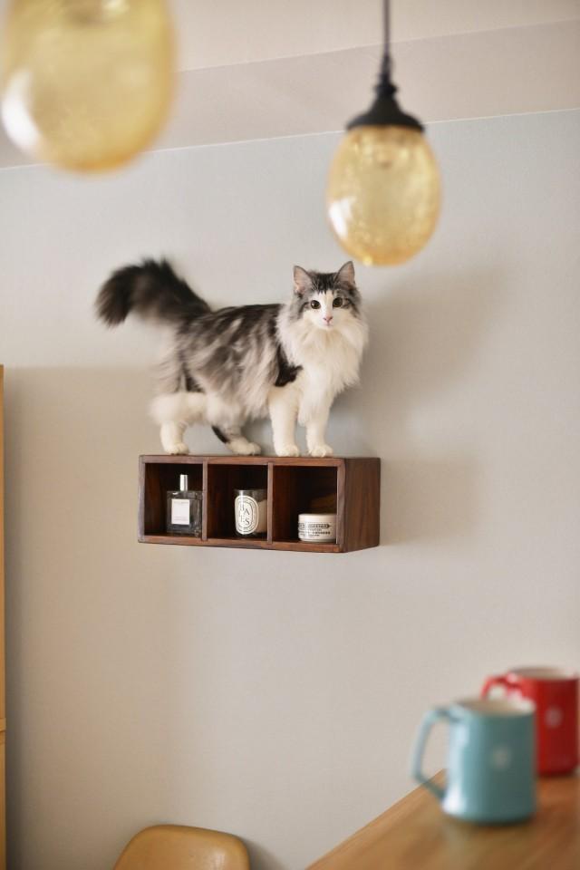 リノベーション、夢工房、猫、猫と暮らす、飾り棚、猫が好きな場所、猫のお気に入り