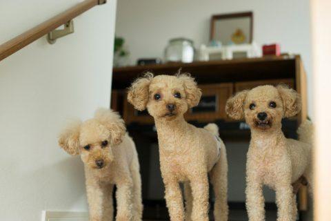 三井のリフォーム、三井不動産リフォーム、リノベーション、戸建リノベ、2世帯リノベ、2世帯住宅、DIY、犬と暮らす