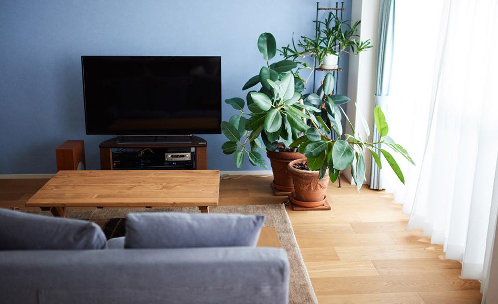 マンションリノベーション,インテリックス空間設計,リビング,観葉植物,テレビ