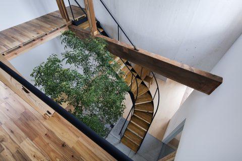 戸建てリノベーション、ツドウデザインスタジオ、吹き抜け、シンボルツリー、中庭