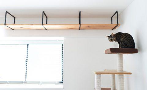 マンションリノベーション、インテリックス空間設計、キャットウォーク、猫インテリア、キャットタワー