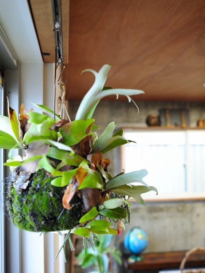 住環境ジャパン,マンションリノベーション,定額制リノベーション,リビング,観葉植物