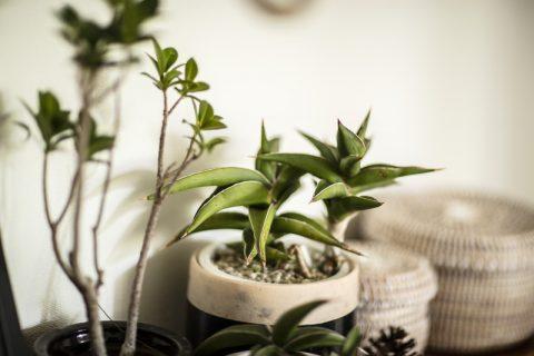 マンションリノベーション、ハコリノベ(SUN REFORM)、グリーンのある暮らし、観葉植物、オシャレ鉢植え