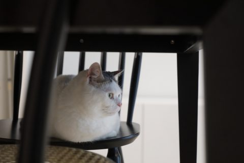 インテリックス、マンションリノベーシン、猫と暮らす、猫のいる暮らし、マンチカン、猫