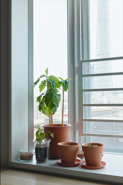 マンションリノベーション、インテリックス空間設計 、スカイツリー、出窓インテリア、グリーンインテリア