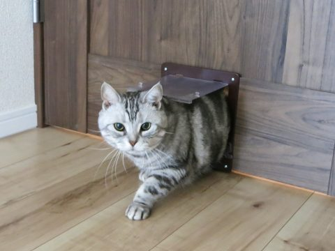 マンションリノベーション、野村不動産パートナーズ 、猫専用扉、猫の出入り、リビングドア